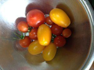 ミニトマト、キュウリのプランター栽培―51日目~73日目