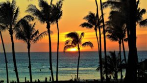 映画「ファミリー・ツリー」ハワイの大自然の環境で家族の大切さをもう一度考える