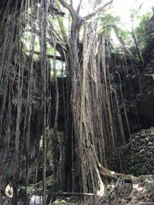 沖縄・南城市「ガンガラーの谷」はスピリチュアルなスポット