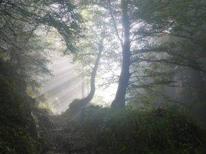 映画「羊と鋼の森」映像を観ても、目を閉じて音を聴いてみ、美しい映画