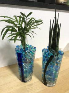 「観葉植物のハイドロカルチャー(水耕栽培)」部屋に自然をいれる