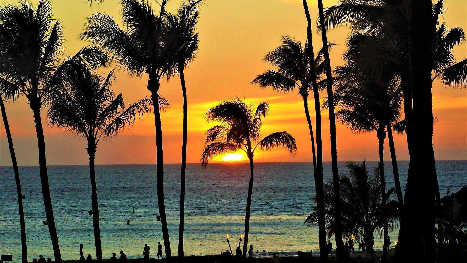 映画「50回目のファーストキス」ハワイの緩やかな時間の流れを感じることができる