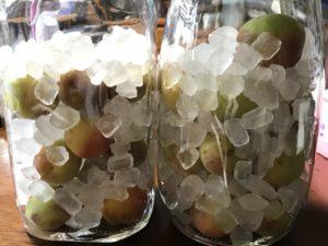 「梅シロップ」を作ってクエン酸を大量に摂取して夏に元気を取り戻せるか